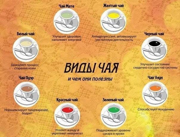 Чем полезно чай мате