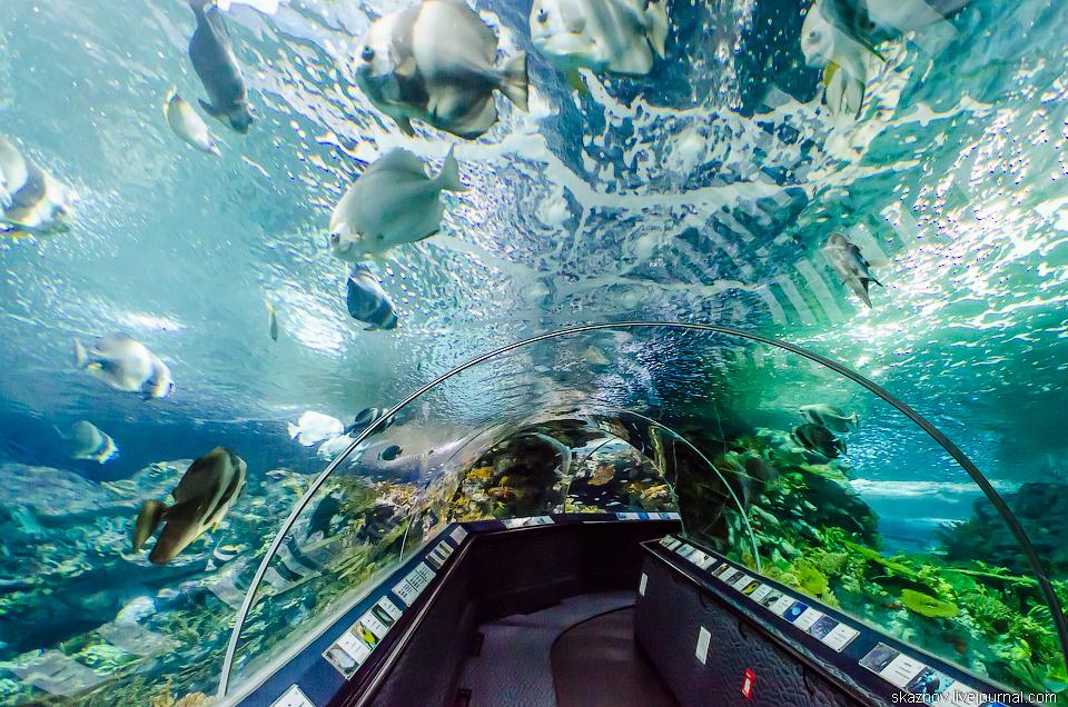 Где в крокусе находится океанариум